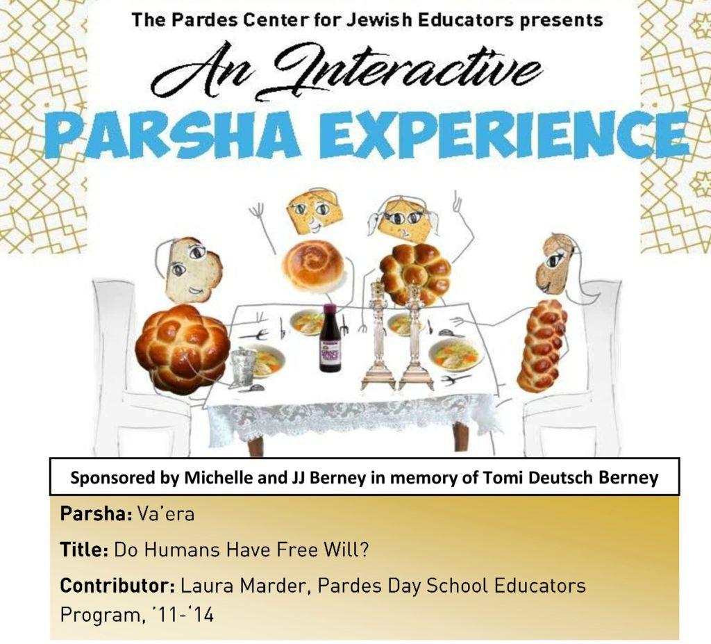 pardes institute of jewish studies elmad interactive parsha experience